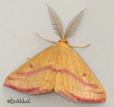 What is the difference between butterflies and moths ... - photo#11