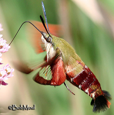 What do butterflies and moths eat? | The Children's Butterfly Site