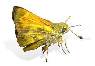Are butterflies poisonous? | The Children's Butterfly Site